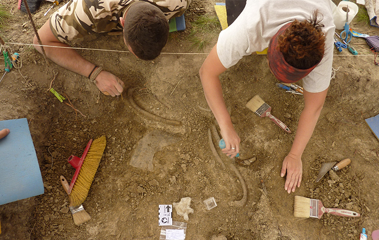 FCT NOVA investigator discovers new primitive mammal